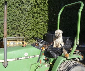 Holbrook Hound on Tractor